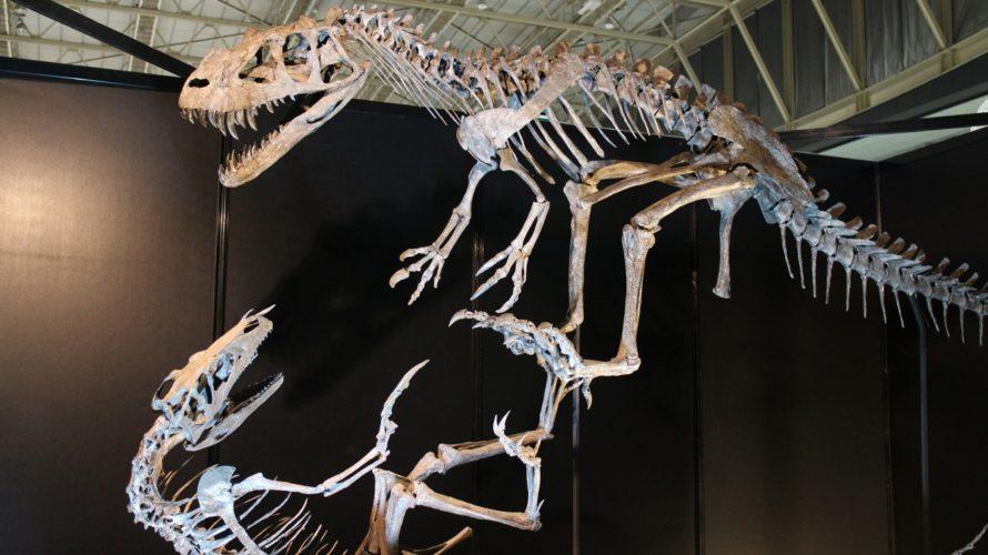 恐竜博で気づいた、人を駆り立てるモノ